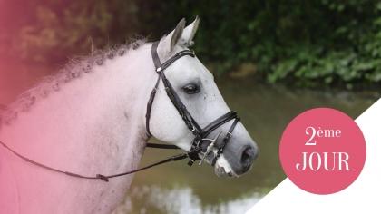Sologn'Pony 2017 : Les meilleurs poneys de 5 ans dévoilés