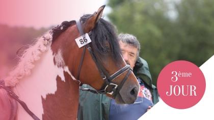 Sologn'Pony 2017 : Les Champions des 7 ans Future Elite et 4 ans C