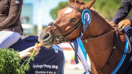 Sologn'Pony 2019 : horaires, poneys à vendre et autres informations