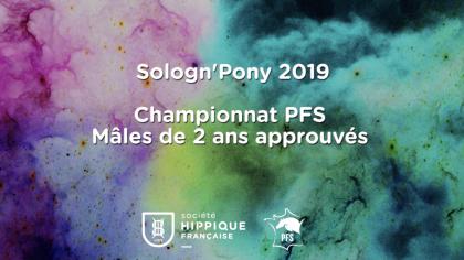 Étalons de 2 ans Poney Français de Selle approuvés