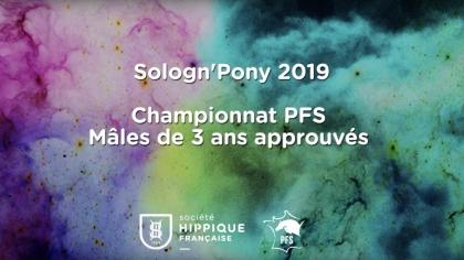 Étalons de 3 ans Poney Français de Selle approuvés