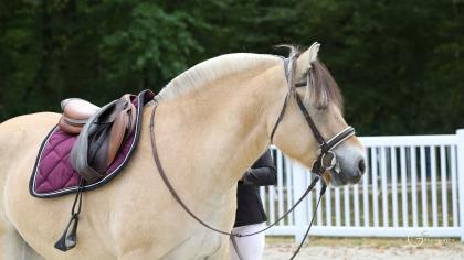 Compiègne 2019 : Gloe d'Ober, Championne PRATIC des poneys de 3 ans