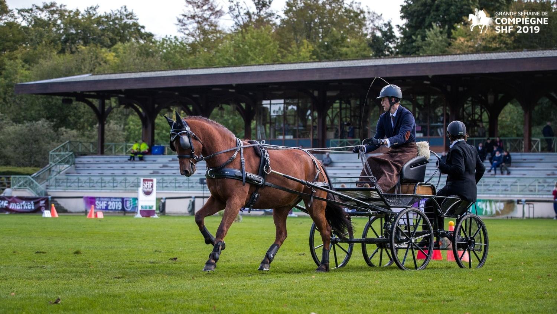Compiègne 2019 : Les chevaux de Qualification 1ère année ont...