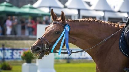 Lire l'acutalité Grande Semaine de Fontainebleau 2020 : Liste définitive des chevaux qualifiés