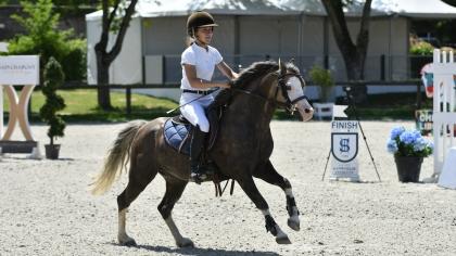 Révision du quota de poneys qualifiés pour le Sologn'Pony dans les 4 ans C